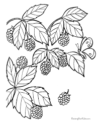 blackberry coloring pages fruit