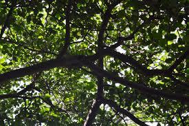 albero giardino file albero giardino inglese jpg wikimedia commons