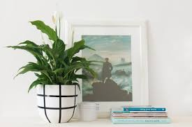 Plants That Survive With No Light 5 Overlooked Plants That Can Survive The Dark Almost Apartment