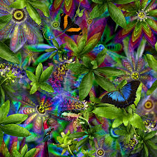 Rainforest Passion Flower - cassowary country collection naturesface art