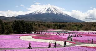 garden near mount fuji in japan u2022 earth com
