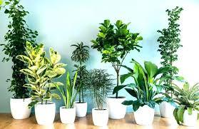 live indoor plants live house plants for sale fresh on simple indoor large uk krepim