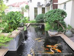 all at fountain design trading koi pond koi pond design fish
