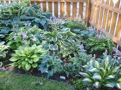Shady Backyard Ideas 25 Best Ideas About Shade Landscaping On Pinterest Shade Garden
