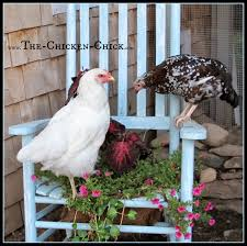 the chicken 20 winter boredom busters for backyard chickens