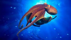 Seeking Octopus Octopuses On Flipboard