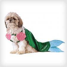 Female Dog Halloween Costumes 38 Dog Halloween Costumes Costume Yeti