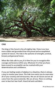 348 best tree magic images on pinterest magick herbal magic and