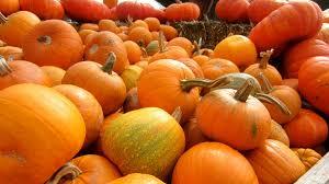 halloween pumpkin patch background pumpkin patches near san antonio 2014 kristalli real estate llc