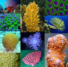 coral pattern skillshare projects