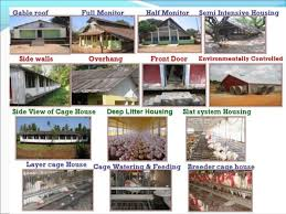 Types Of House Designs Design Of Poultry Houses
