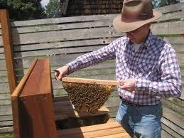 matt reed of bee thinking builds custom hives for portland u0027s