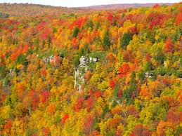 West Virginia forest images File blackwater canyon fall colors west virginia forestwander jpg
