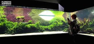 Aquascape Inspiration World U0027s Largest Nature Aquarium Is An Inspirational Treasure