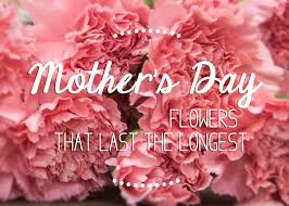 mothers day flowers s day flowers that last the longestflower press