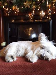 dog cremation parlour guaranteed indivdual pet cremation service wiltshire
