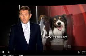 australian shepherd 60 minutes tricks 60 minutes june 2011