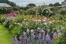 nursery visit david austin roses in shropshire gardenista