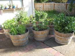 39 best vegetable gardening images on pinterest vegetables