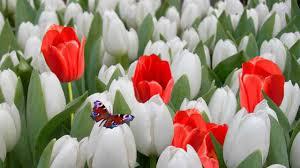 spring flowers youtube