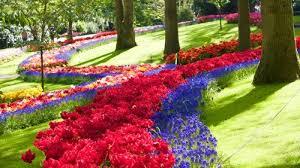 keukenhof garden fast track admission u0026 roundtrip transportation