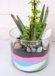 diy sand and succulent terrarium u2013 bonsaijack com