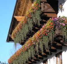 balkon blumen balkonblumen blütenpracht am berghof sturmgut berghof sturmgut