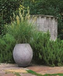 grasses as container plants cheekwood botanical garden and museum