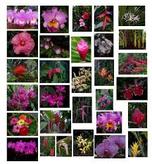 List Of Tropical Plants Names - 100 exotic flowers and names exotic tropical plants sub