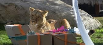 imagenes de los reyes magos y sus animales los animales de bioparc también recibieron sus regalos de los reyes