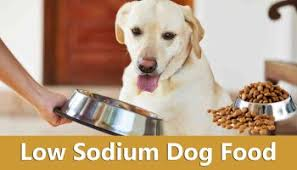 homemade dog food recipes give your pet the ideal diet ihome pets