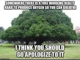 Tree Meme - dopl3r com memes you should go apologize to a working hard