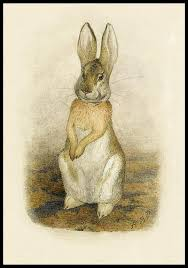rabbit by beatrix potter bibliodyssey beatrix potter rarities