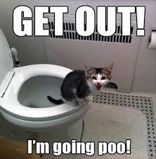Funny Poop Memes - funny poop memes 17