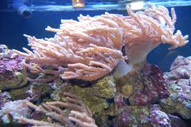 zoo frag soft coral misc for sale