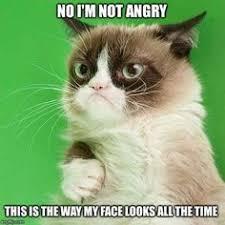 Grumpy Meme Face - oh grumpy cat grumpy cat pinterest grumpy cat funny