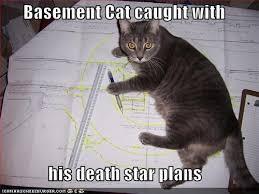 Star Wars Cat Meme - 7 best star wars kitty images on pinterest star wars starwars