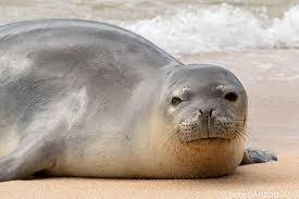 Hawaii wild animals images 10 cute animals in hawaii to greet you aloha jpg