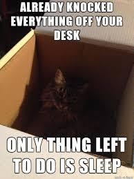 Cat Problems Meme - first world cat problems meme on imgur