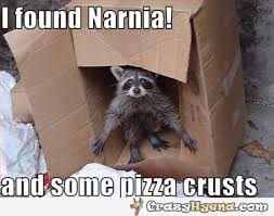 Funny Raccoon Meme - awesome funny must see raccoon pictures