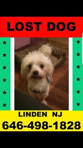 57 best new jersey us lost dog registry images on pinterest