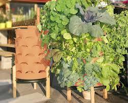 vertical veggie garden in a 55 gallon u0027drum u0027 green bean connection