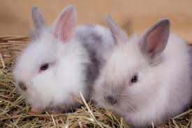 basic pet care tips for your dwarf bunnies