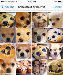 dog photo albums chihuahua or muffin puppy or bagel your meme