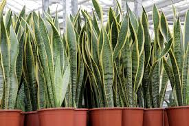 15 houseplants that clean the air and are almost impossible to kill