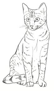 how to draw cat step 5 drawing pinterest cat cat drawing