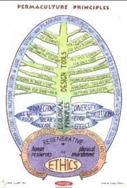 hand drawn permaculture design drawings pinterest
