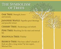 cremation tree planting a memorial tree for your loved one