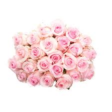 light pink rose bouquet roses types of flowers flower muse