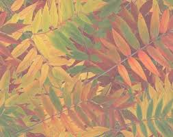 25 fall leaves background ideas fall leaves